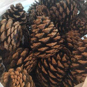 Bundle of Montana Pinecones for crafting or decor